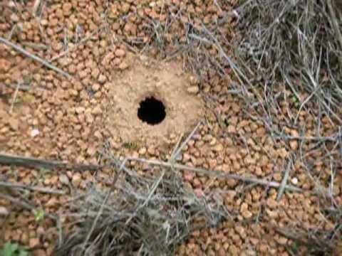 Nido avispas 07102006 youtube for Ahuyentar abejas jardin
