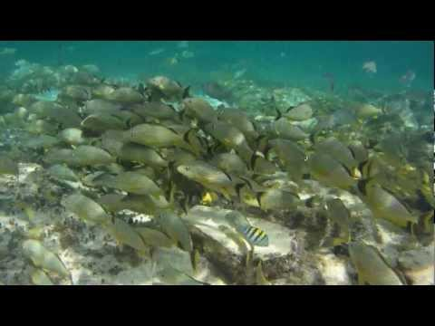 Snorkeling in Cozumel Mexico with EFish