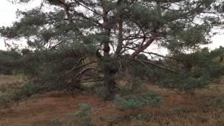 Im Wald und auf der Heide 08