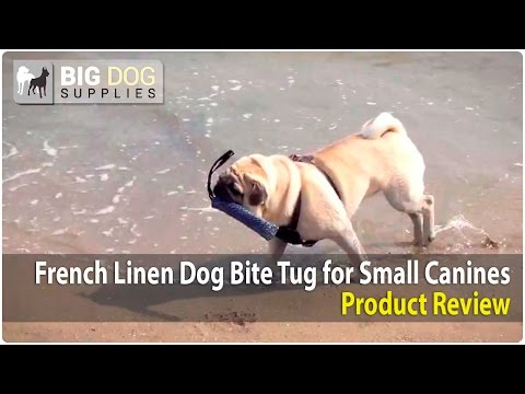 Pug, Welsh Corgi and Russian Spaniel Playing with Small French Linen Bite Tug