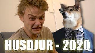 Husdjur år 2020