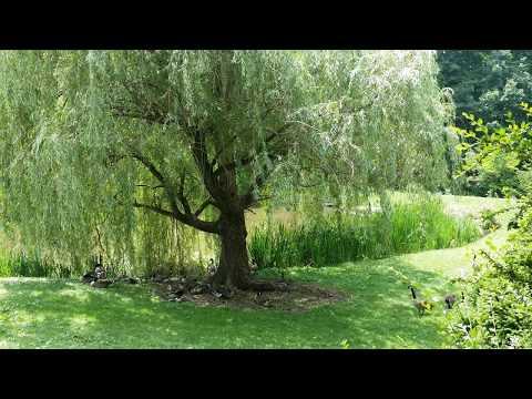 I Am Free, I Am Unlimited Meditation (feat. StoweGood,