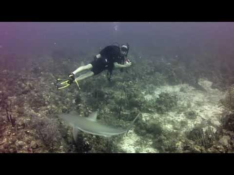 SHARKS : Diving in St Kitts