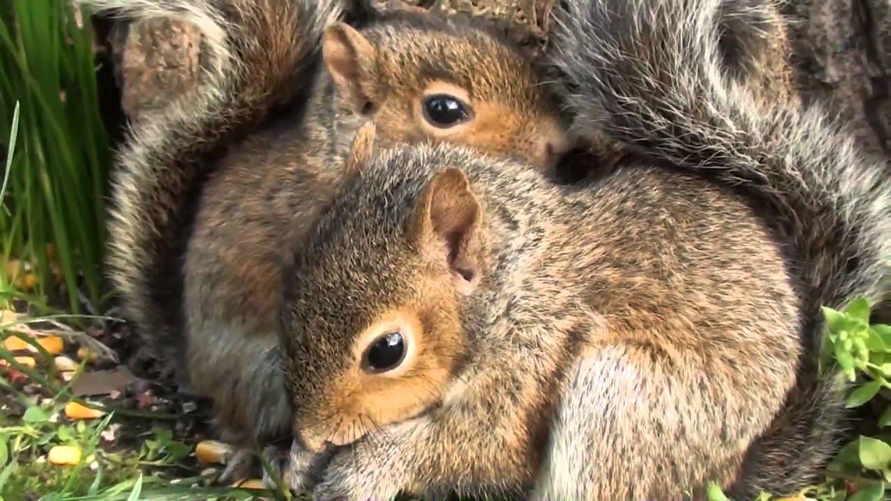 Cute Baby Squirrels - ...