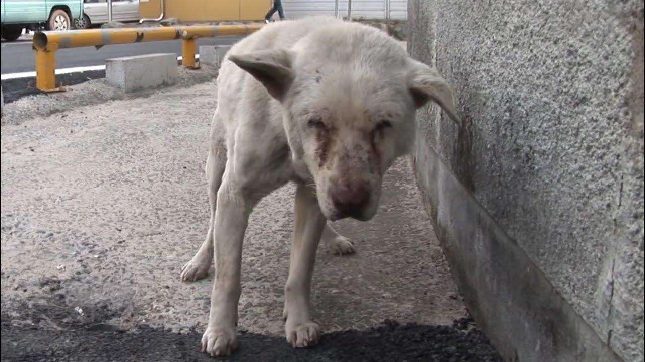 Как Коронавирус и Самоизоляция Людей Повлияли на Бездомных Животных?