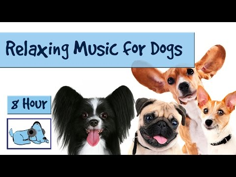 8 Hour Playlist to Relax Dogs and Puppies! Music for Dogs of All Breeds Chihuahua, Pitbull, Spaniel