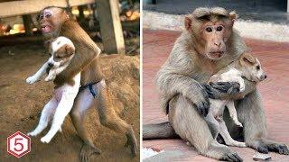 Monyet ini pertaruhkan Hidupnya Menyelamatkan anak Anjing Dari Ledakan, inilah yg terjadi setelahnya