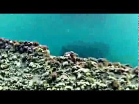 Tyrrhenian sea Posidonia oceanica