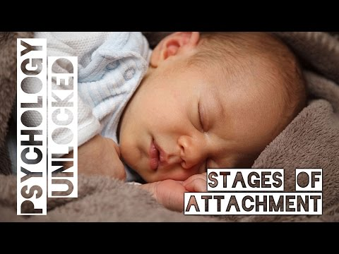 How Babies Form Attachments | Four Stages | Schaffer & Emerson