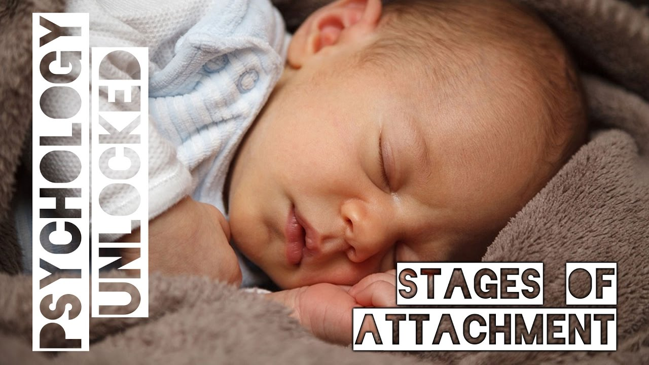 How Babies Form Attachments | Four Stages | Schaffer & Emerson ...