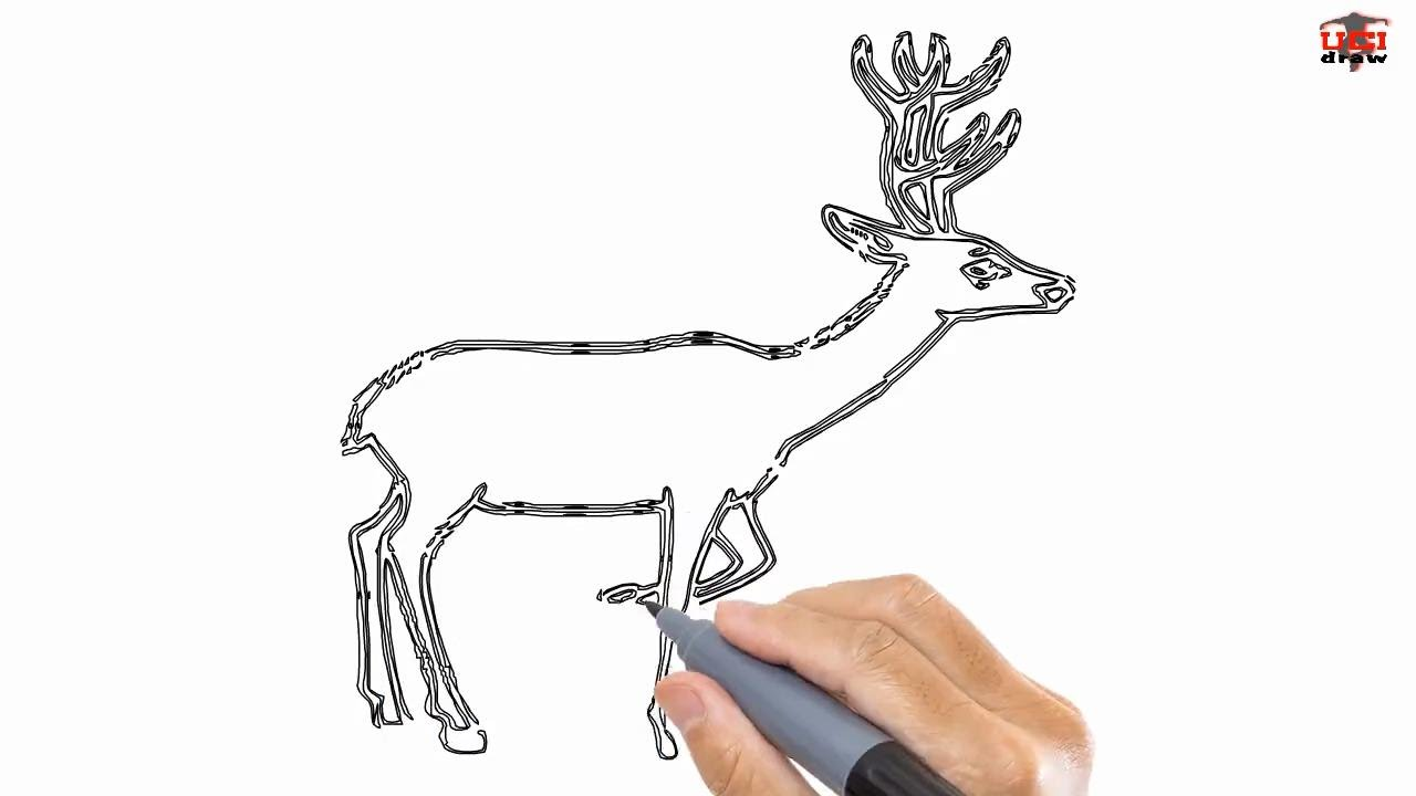 How To Draw A Deer Easy Drawing Step By Step Tutorials For Kids