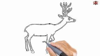 deer step easy drawing draw drawn drawings reindeer dear tutorials paintingvalley
