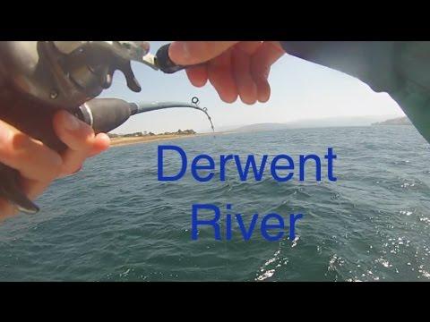 Derwent river Fishing #8