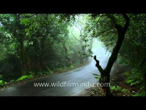 Driving through mist covered trees in Satara, Maharashtra