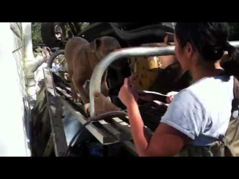 Pit bull rescue 09 01 12