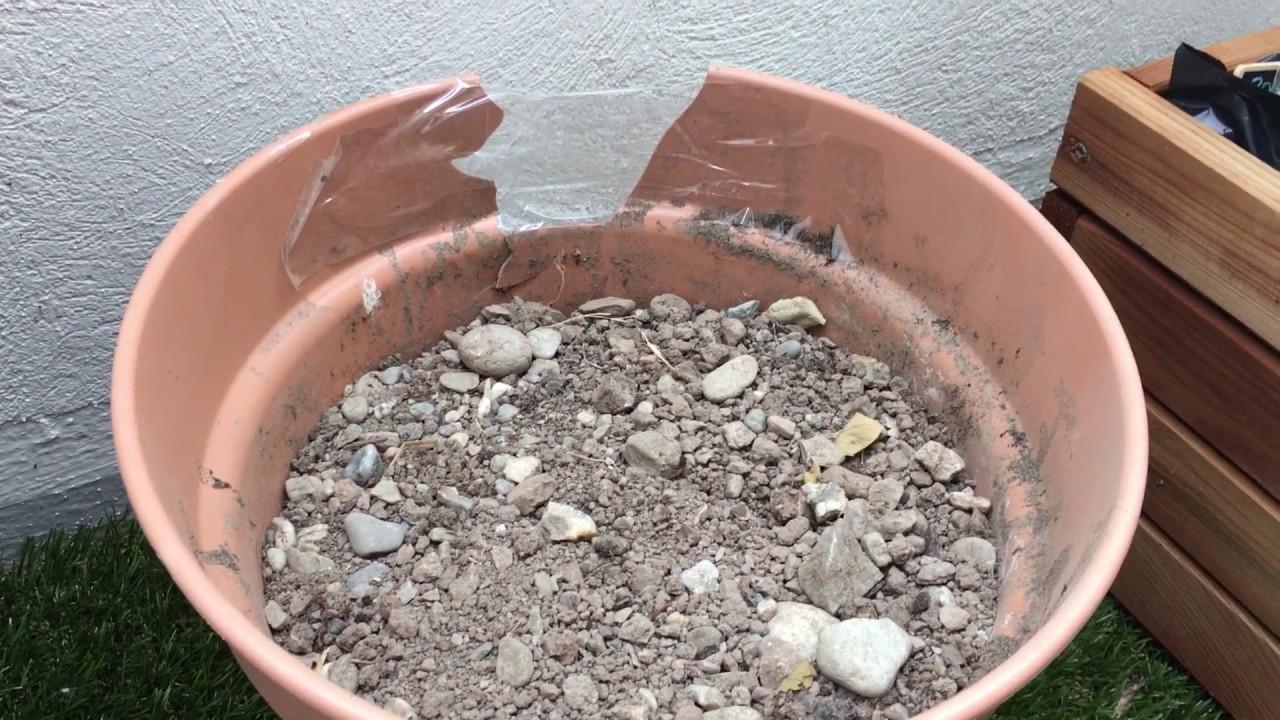 planter et cultiver un poivron sur son balcon potager en pot youtube. Black Bedroom Furniture Sets. Home Design Ideas