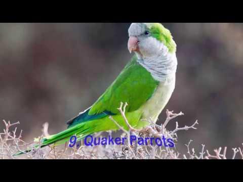 Top 10 Best Pet Birds