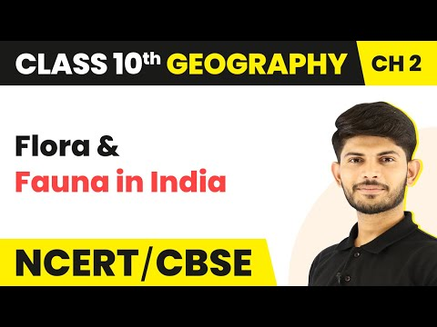 Flora & Fauna in India | Forest and Wildlife Resources | Geography | Class 10th