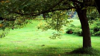 Shedin Dujone | Tagore Song 05 | Relaxing Piano Music |