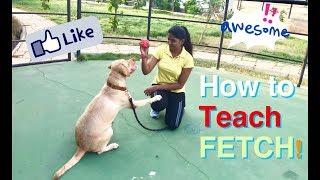 teach a dog to fetch a ball!