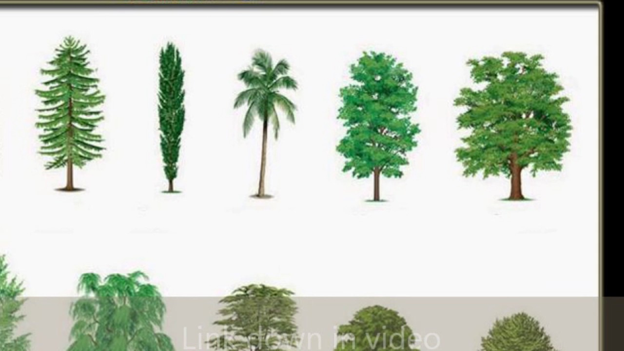 types of common trees youtube