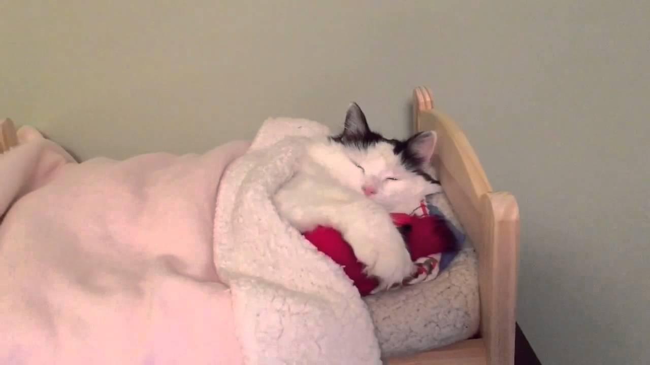 Tiny Bed cat sleeps in tiny human bed - youtube