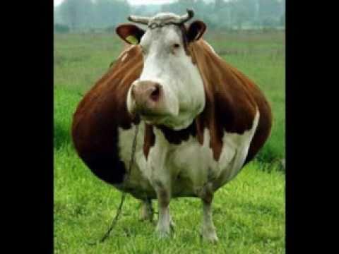 The World's Fattest Animals!