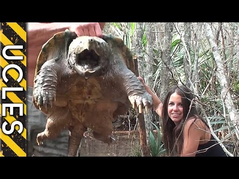 Snapping Turtle Capture with Andrew Ucles & Laura Zerra