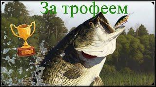 Русская рыбалка 4 02 03 2020 Северский донец