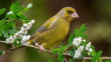 Springwatch Wildlife Live Cameras 🦊🐝   BBC Earth