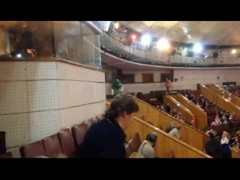 В новокузнецком цирке во время представления сбежала обезьяна