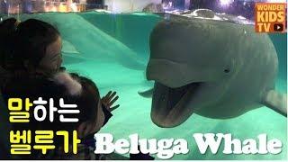 전설의 흰고래 벨루가 친구하기 프로젝트 3편. 롯데월드 아쿠아리움 벨루가 재이와 지수를 알아보다 beluga whale l aquarium