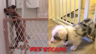 Pet Escape Artists - Funny Pets Videos Compilation 2021 #22