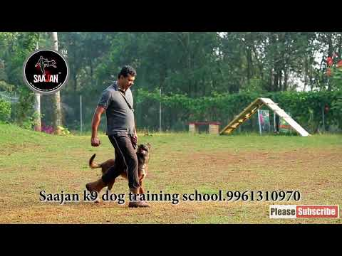 Saan.Saajan k9 dog training school.9961310970