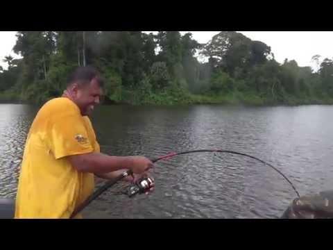 Chew on Dutch :  GPS Henk Catches a Lau Lau @ Coppename river Suriname