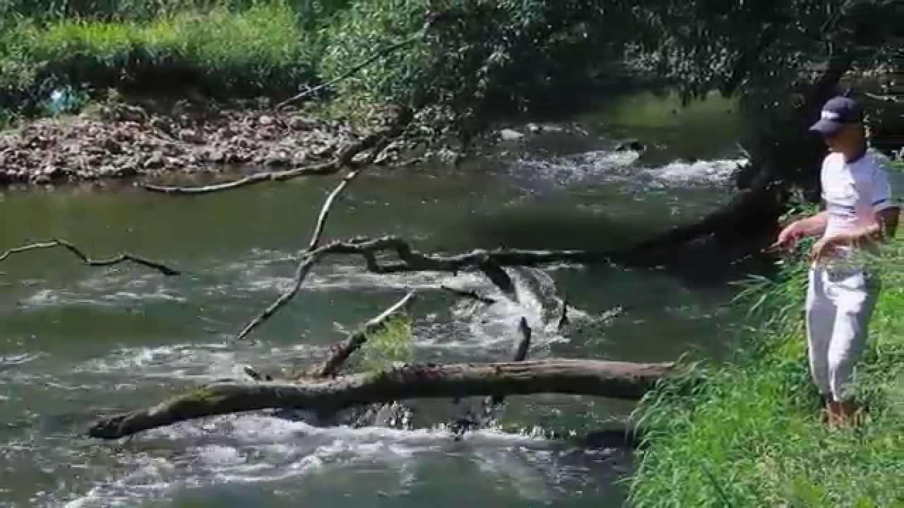 истра рыбалка на спиннинг