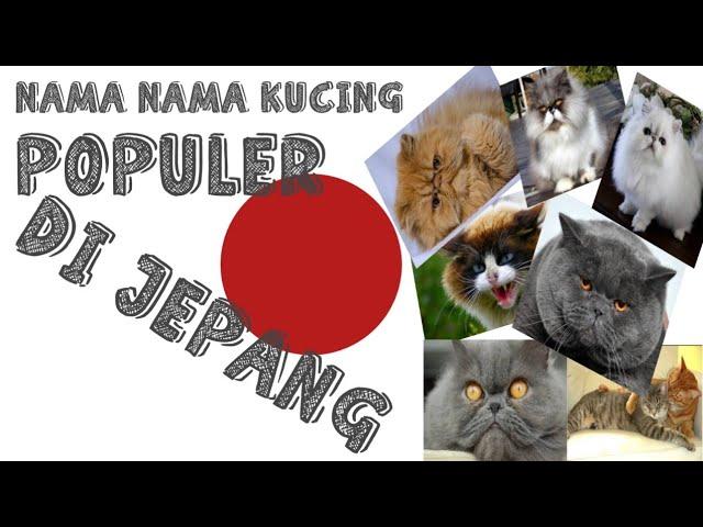 Nama Kucing Populer Di Jepang Nino Cat Diary Eps 8 Youtube