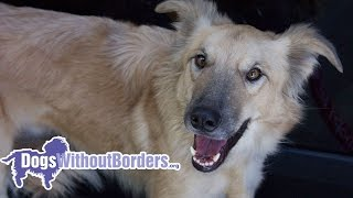[dogs Without Borders] Adopt Charlie! From Feral To Family!