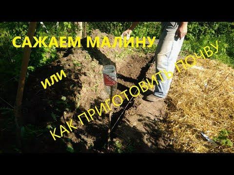 Посадка малины.Почва для малины.   выращивание   посадочное   подготовка   открытый   посадка   малины   грунта   почва   место   грунт