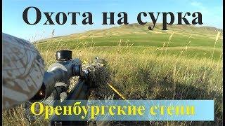 Охота на сурка - Оренбургские степи