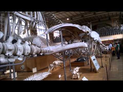 Paris - Museum of Natural History -France