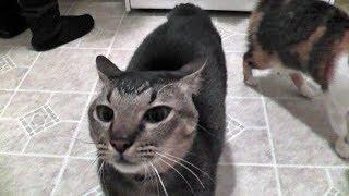 Milo Wants His Cat Food NOW!