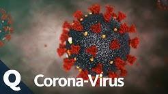 Coronavirus: Das wissen wir über Covid-19 | Quarks Extra