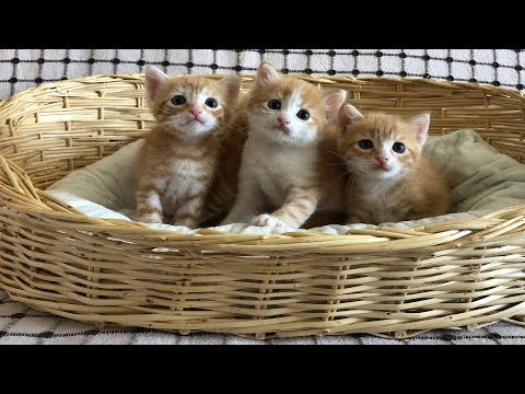 Basket of cute little kittens meowing and playing - YouTube