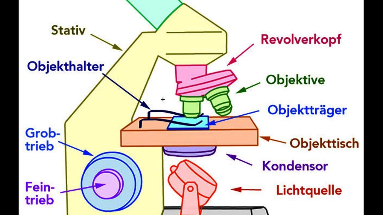 Mikroskop Aufbau Bestandteile