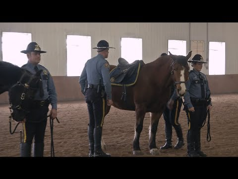 Retirement Ceremony for St. Paul Police Horse, 2/15/2018