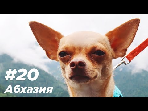 #20 Абхазия. Едем с 2мя собаками!