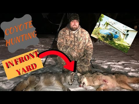 coyote hunting at night with thermal