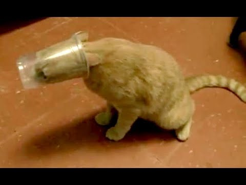 You CAN NOT IMAGINE ANIMAL FAILS FUNNIER THAN THIS - Funny ANIMAL compilation