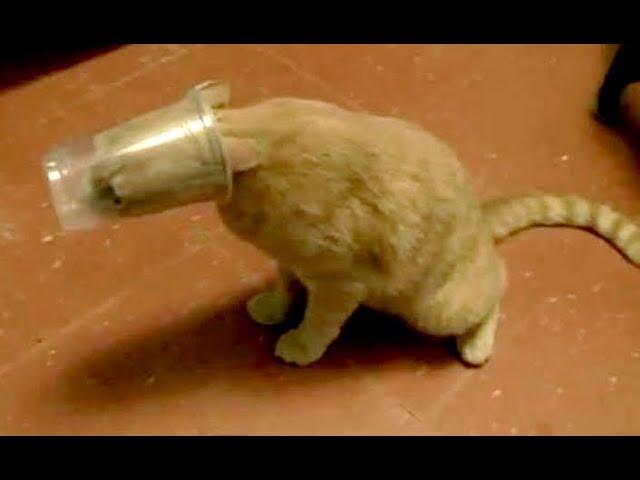 Diabetic cat pooping everywhere